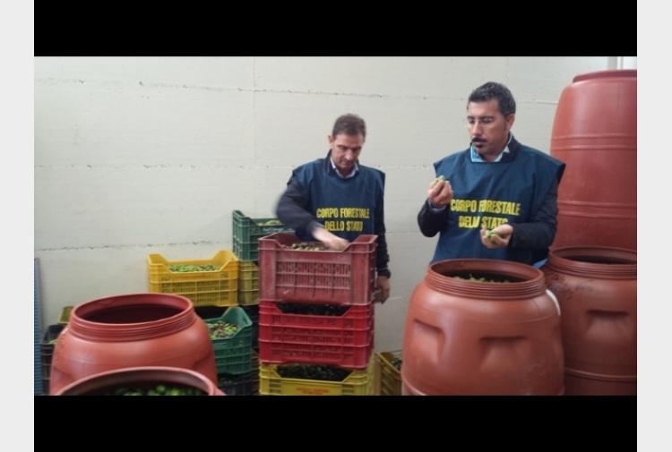 Olive da tavola colorate sequestri tiscali notizie - Puglia in tavola bitetto ...