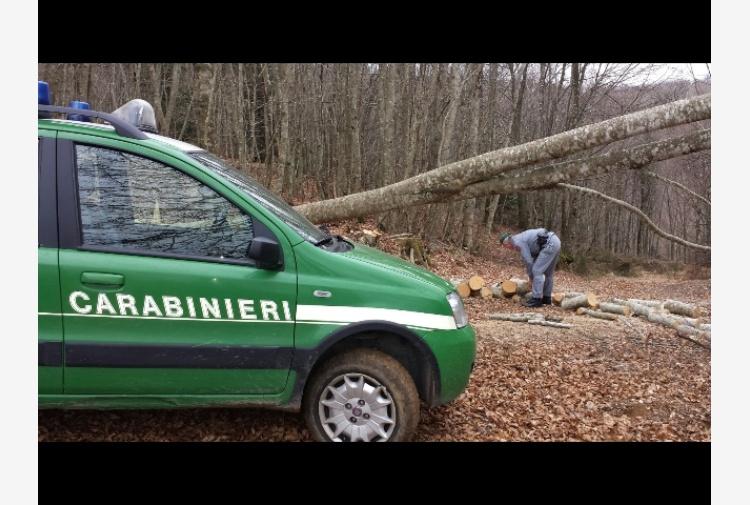 Sorpreso a tagliare alberi, arrestato