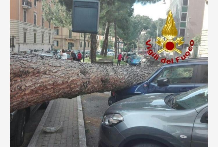 Roma, paura a Corso Trieste: grosso pino crolla su auto