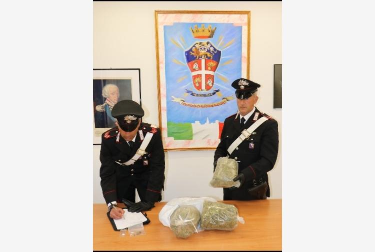 1,5 kg di marijuana in casa, arrestato