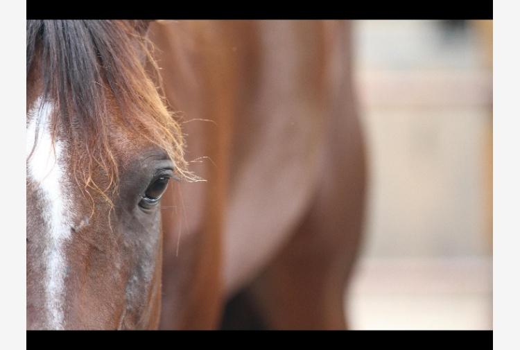 Fiamme in maneggio Caldonazzo, cavalli in salvo