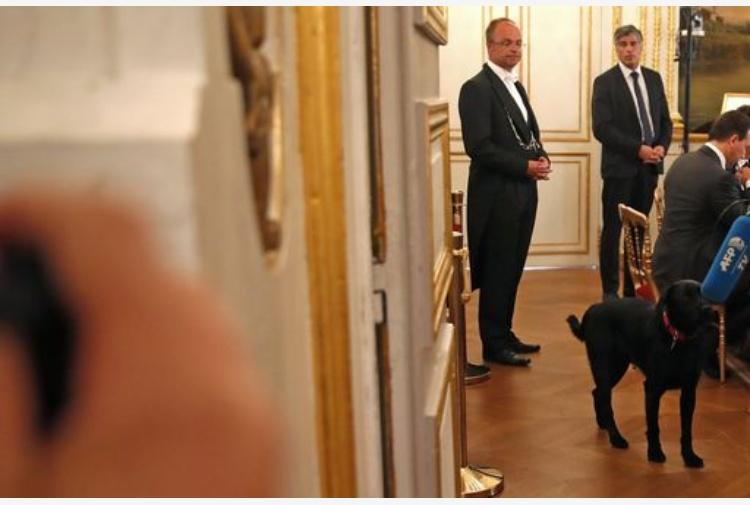 Macron Adotta Un Cane Nemo Un Labrador Nero Alleliseo Tiscali