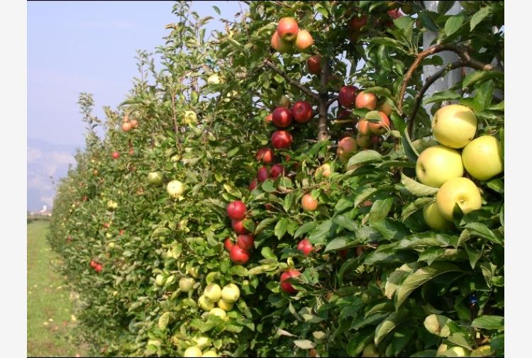 Enogastromia: concorso 'mela a modo mio'
