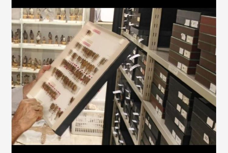 25.000 insetti donati a Comune di Rovereto