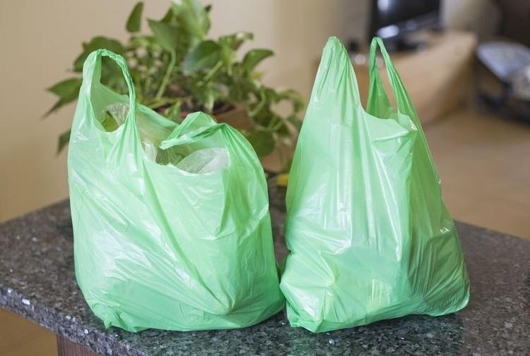 Ambiente: Bruco mangia-plastica per salvare il pianeta