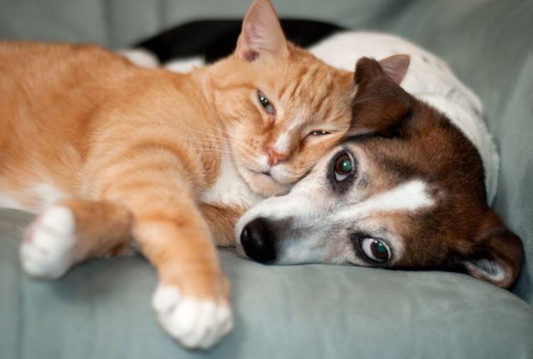 Chi è Più Intelligente Tra Cane E Gatto Tiscali Notizie