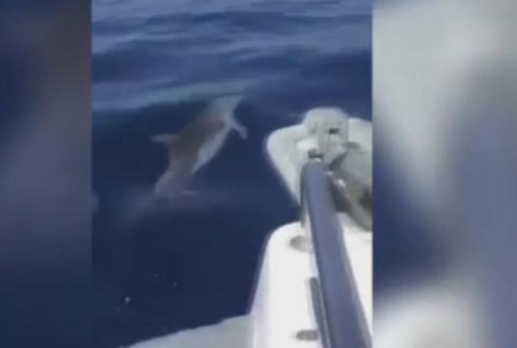 Isole Eolie, pescatori contro delfini: