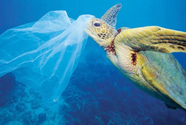 Tartarughe minacciate dai rifiuti gettati in mare for Vasca in plastica per tartarughe