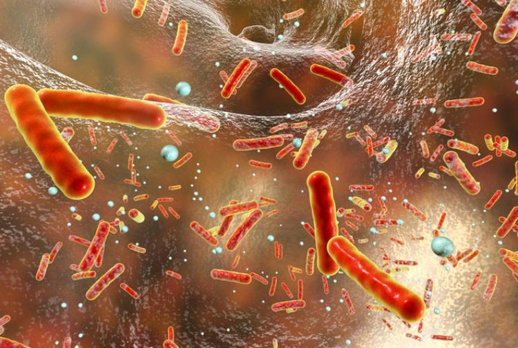 Farmaci antibiotici nei fiumi livelli fino a 300 volte soglie sicure