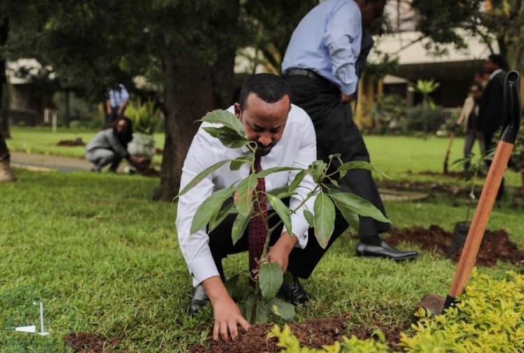 L'Etiopia pianta 350 milioni di alberi in 12 ore contro la deforestazione