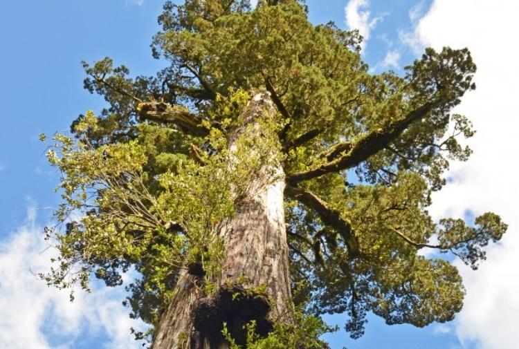 albero anelli di carbonio datazione GFCI interruttore aggancio